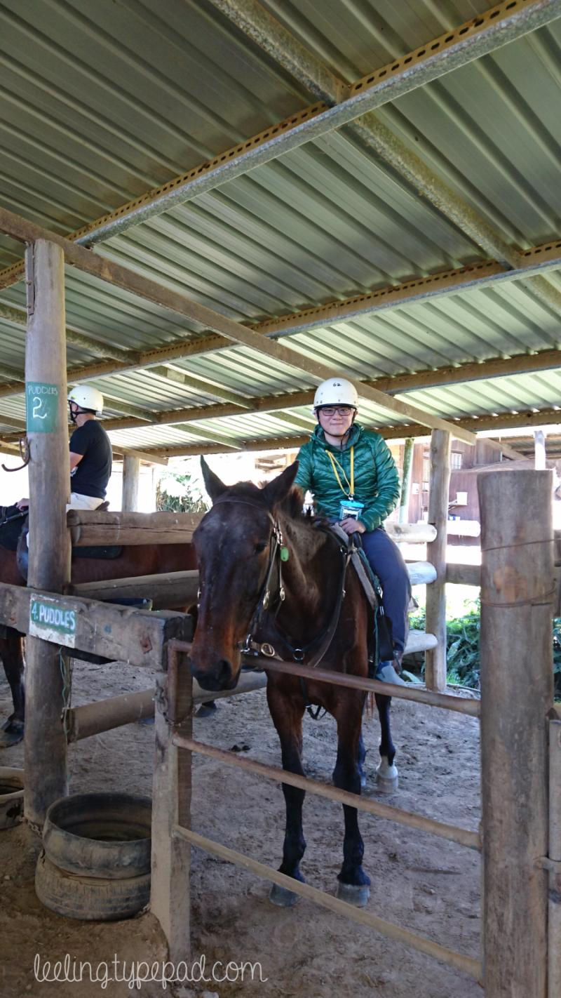 12-Numinbah-Horse-Riding