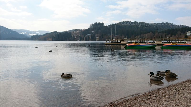 37-Titisee