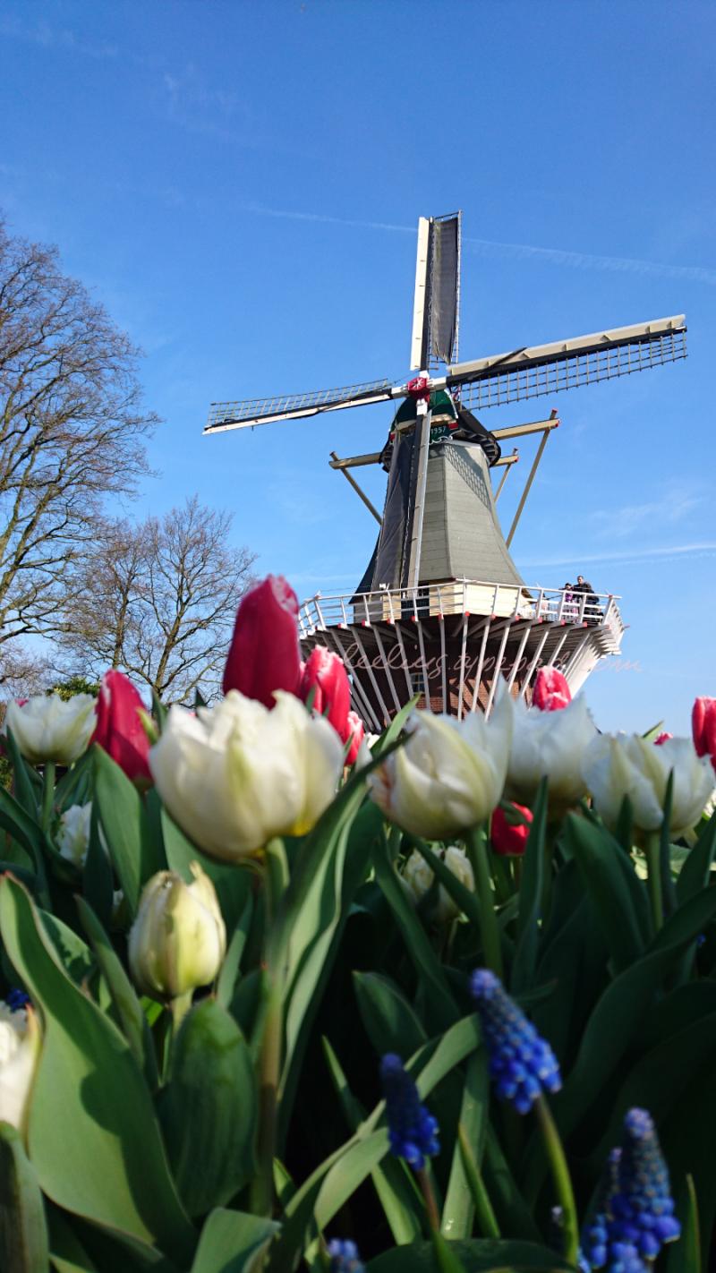 56-Netherlands-keukenhof